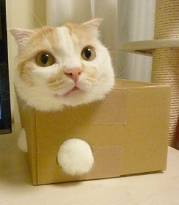 cat-in-a-box-2