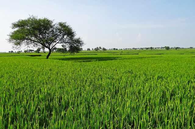 india-crop