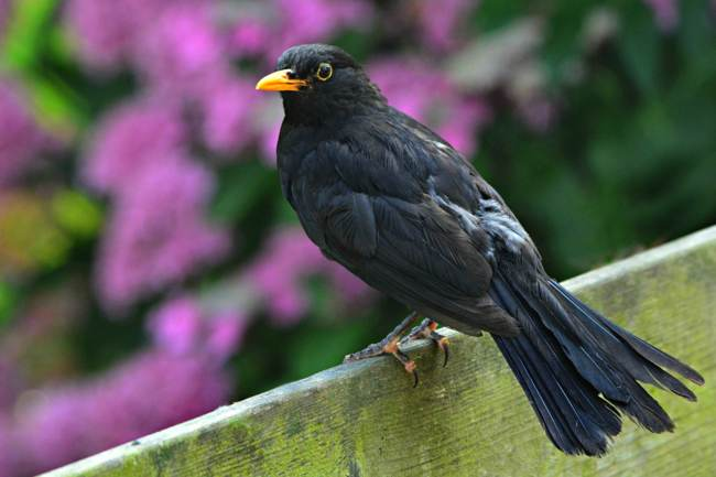 Blackbird ILS Marketplace